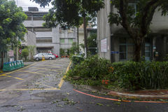 Damage done by the Typhoon Soulik to the Taipei city Stock Photos