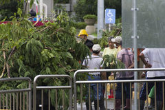 Damage done by the Typhoon Soulik to the Taipei city Stock Images