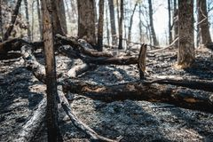 Damage from a Forest Fire. Fire damage in the forrest of Jocassee Gorges, SC Stock Photo
