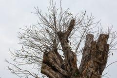 Damage Tree Stock Photos