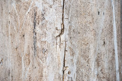 Damage white  wood by termite Royalty Free Stock Photography