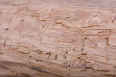 Damage Wood Stock Images