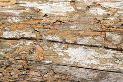 Damage wooden eaten by Termite in traditional thai house Stock Image