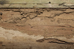 Damage wooden eaten by Termite in traditional thai house Royalty Free Stock Photo