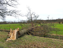 Damaged broken tree by hurricane wind after storm Stock Images