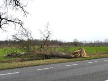 Damaged broken tree by hurricane wind after storm on the side of the road Stock Photo