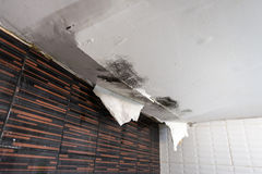 Damaged ceiling from water leak. Damaged ceiling from rain water leak Royalty Free Stock Images