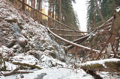 Damaged fallen trees on creek in valley after strong storm Royalty Free Stock Photos