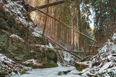 Damaged fallen trees on creek in valley in winter  after strong Royalty Free Stock Image