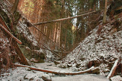 Damaged fallen trees on creek in valley in winter  after strong Stock Photo