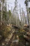 Damaged forest Royalty Free Stock Image