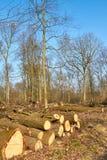 Damaged Forest Stock Image