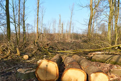 Damaged Forest Stock Photography
