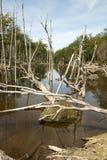 Damaged Forests -  Argentina - Ushuaia - Tierra del Fuego Stock Photo
