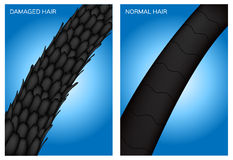 Damaged hair and normal hair Stock Images