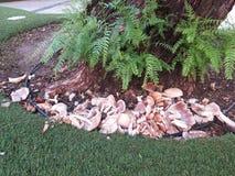 Damaged mushrooms at base of tree Stock Photo