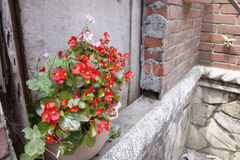 Damaged old ruin concrete brick wall and nature red flower pot Royalty Free Stock Images
