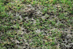 Damaged pitch Stock Images