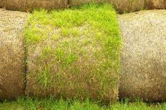 Damaged rotten wheat straw bundles, on green field Stock Images