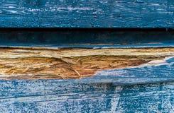 Damaged splittrat trä i färgblåtten i makrocloseup, en naturlig träbakgrundstextur arkivfoto