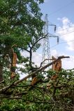 Damaged tree and electric pole. Royalty Free Stock Image
