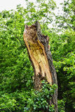 Damaged tree Stock Photo