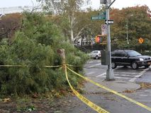 Damaged trees after hurricane Sandy. The day after Hurricane Sandy hits New York.  Damage to large downed trees shown in the Bronx.  Taken October 28, 2012 in stock footage