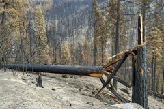 Damaged trees from wildfire Royalty Free Stock Photos