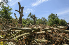Damages caused by storm in Essen , Germany in June 2014 Stock Photo