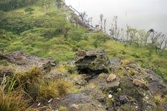 Damani na skale nad Nakuru jezioro Fotografia Stock
