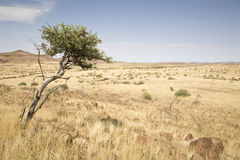 Damaraland Stock Photo