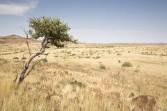 damaraland Arkivfoto