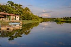 Damas Island mangroveområde - Costa Rica Royaltyfri Bild