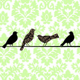 Damask Birds Green. Birds perched on wire - two with damask pattern, Damask wallpaper behind Royalty Free Stock Photography