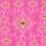 Damask rose Stock Image