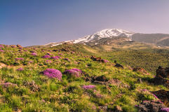 Damavand in Iran Stock Photos