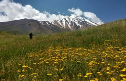 Damavand and wild flowers royalty free stock images