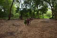 Dambana, Sri Lanka, 12 November, 2015: Inheemse schutterstrijders Stock Afbeelding