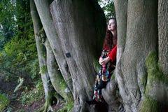 Dame à la mode s'asseyant dans un arbre de hêtre image stock