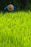 Dame âgée avec le chapeau de paille dans la rizière Photo stock