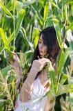 Dame étonnante de brune avec de longs cheveux bouclés, parmi le champ de maïs Photos stock