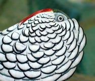 Dame Amherst Pheasant Lizenzfreie Stockfotografie