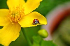 Dame Bird bij de gele bloei stock fotografie