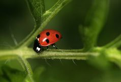 Dame Bug Royalty-vrije Stock Afbeelding