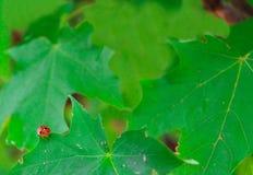 Dame Bug Corner Stock Fotografie