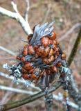 Dame Bug Heaven Stockbild
