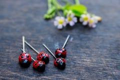 Dame Bug Pin Royalty-vrije Stock Afbeelding