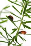 Dame Bugs Stockbilder