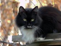 Dame-chat Images libres de droits