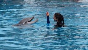 Dame Communicating With Dolphin stockbild